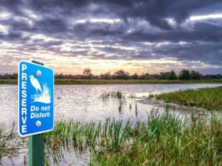 Wetland & Preserves